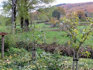 Ook de appelbomen kregen een flinke knipbeurt
