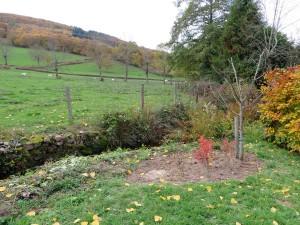 Pruimenboom gesnoeid en struikjes klaar gemaakt voor volgend jaar.