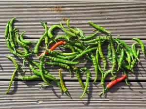Een voorraadje pepers