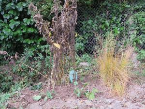 Nieuw stukje tuin