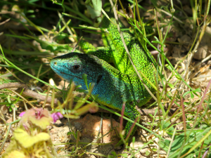 smaragdhagadis