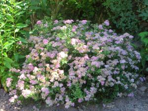 En nog een roze wolk met bloemen