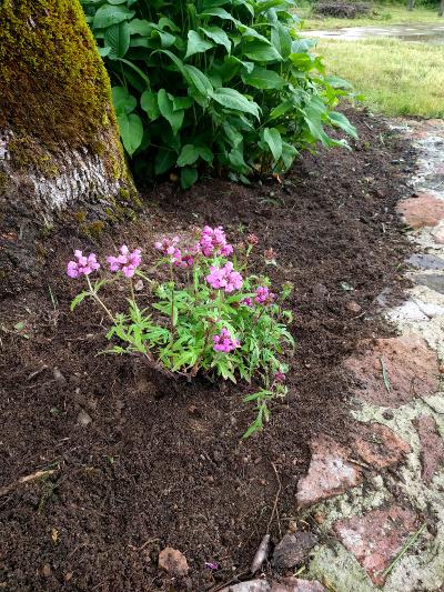 Nieuwe plantjes