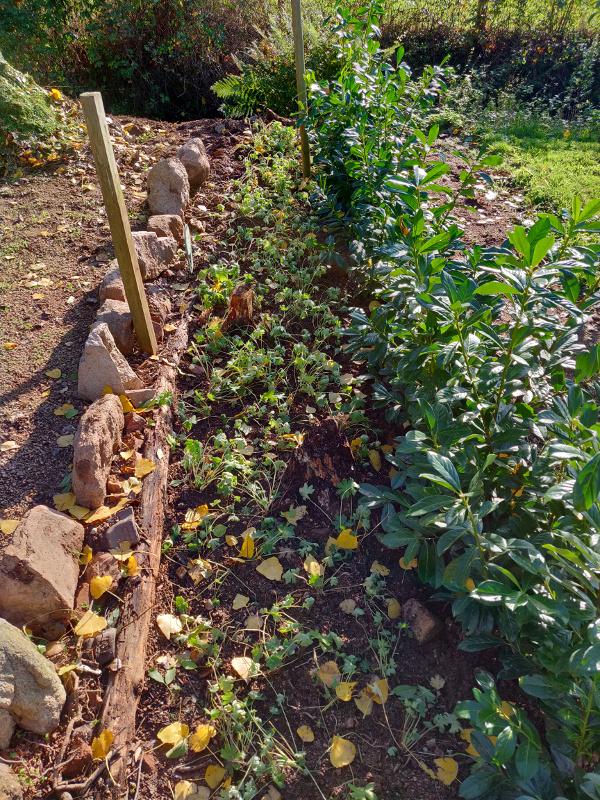 De haag, plantjes en stenen