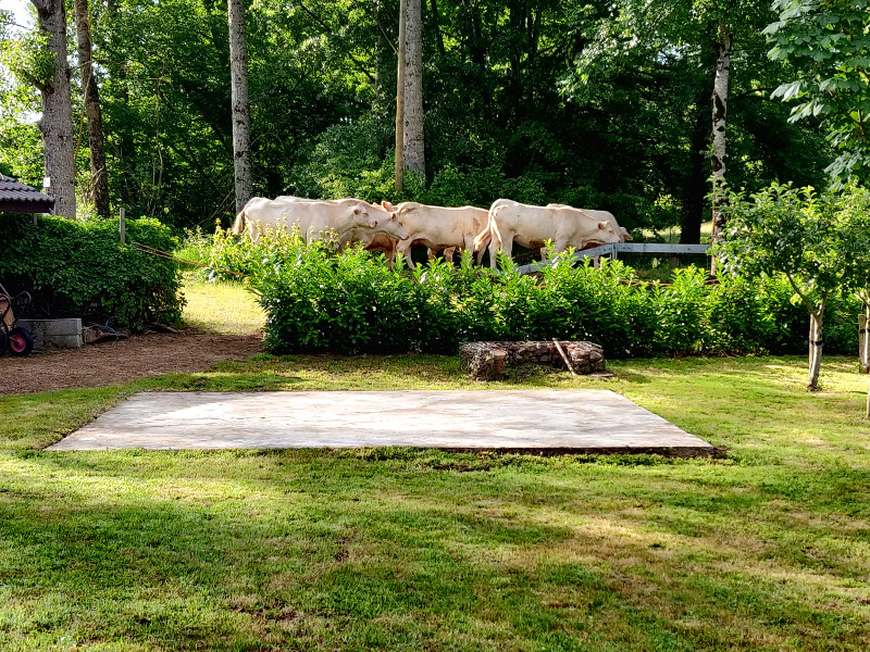 De laatste dag zagen we nog een groep koeien aan de wandel. Zonder boer.