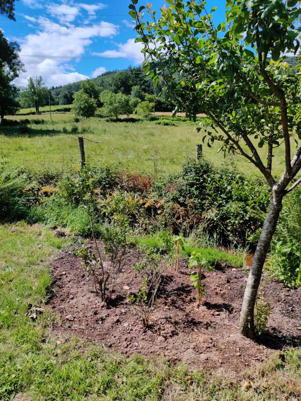 Er staan 2 nieuwe zwarte bessen boompjes.